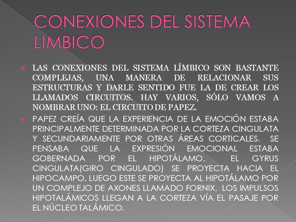 CONEXIONES DEL SISTEMA LIMBICO