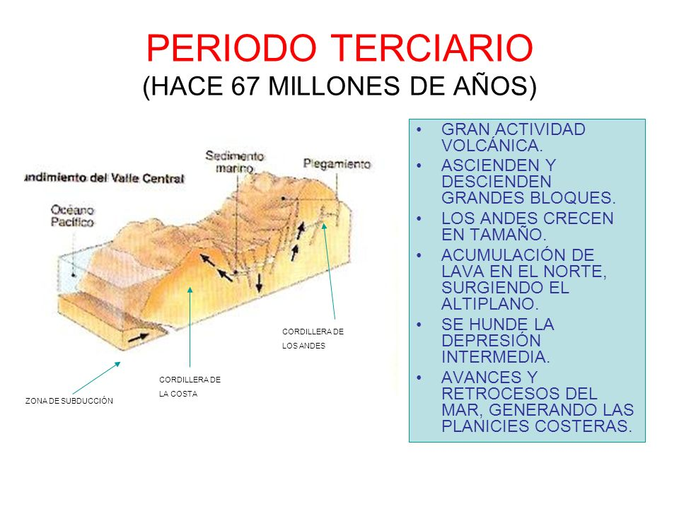 PERIODO TERCIARIO (HACE 67 MILLONES DE AÑOS)
