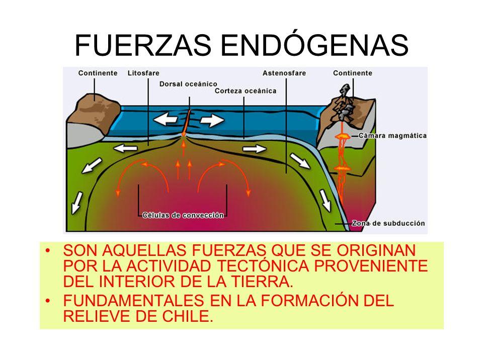 FUERZAS ENDÓGENASSON AQUELLAS FUERZAS QUE SE ORIGINAN POR LA ACTIVIDAD TECTÓNICA PROVENIENTE DEL INTERIOR DE LA TIERRA.