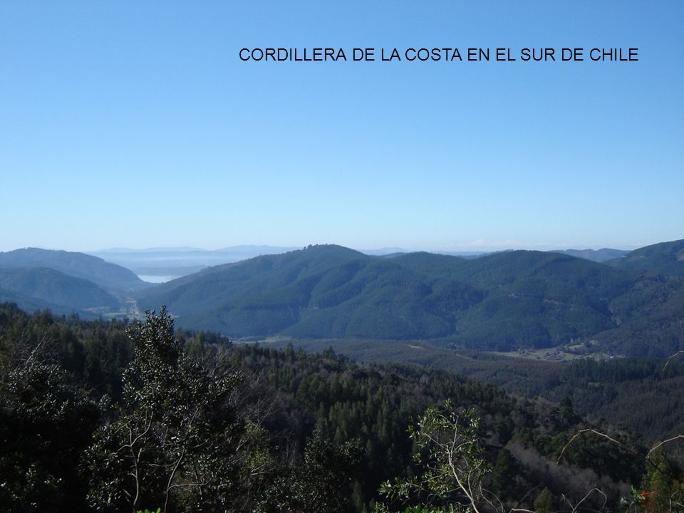 CORDILLERA DE LA COSTA EN EL SUR DE CHILE