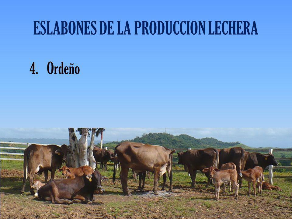 ESLABONES DE LA PRODUCCION LECHERA