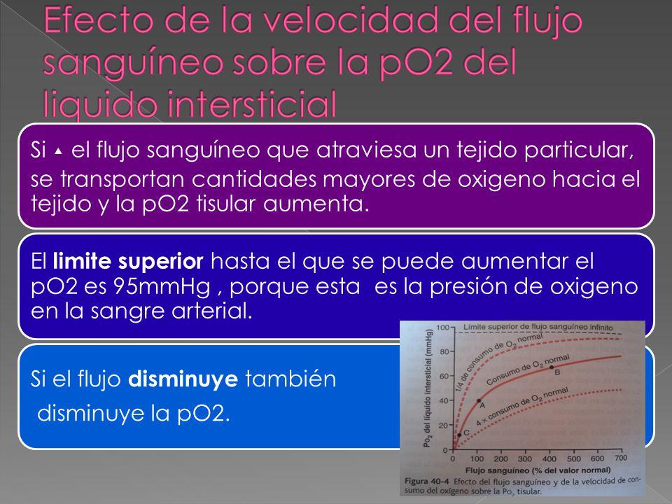 Efecto de la velocidad del flujo sanguíneo sobre la pO2 del liquido intersticial