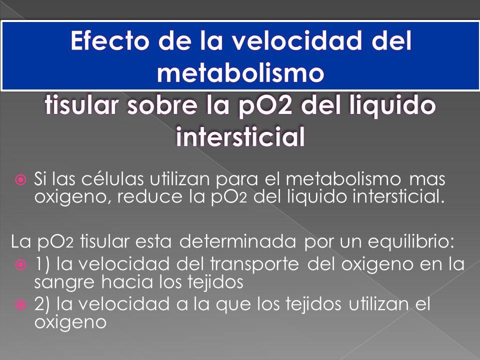 Efecto de la velocidad del metabolismo