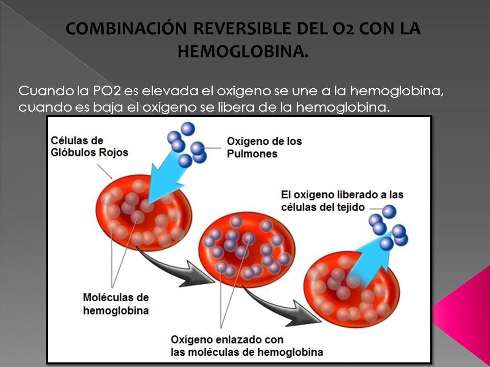 COMBINACIÓN REVERSIBLE DEL O2 CON LA HEMOGLOBINA.