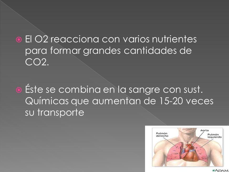 El O2 reacciona con varios nutrientes para formar grandes cantidades de CO2.