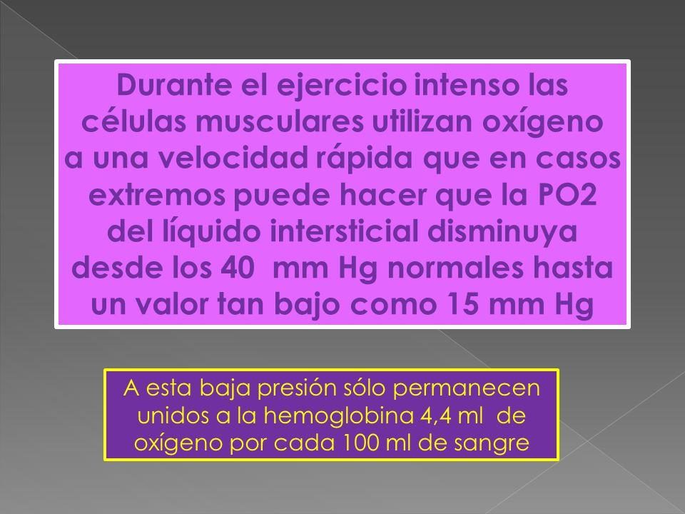 Durante el ejercicio intenso las células musculares utilizan oxígeno a una velocidad rápida que en casos extremos puede hacer que la PO2 del líquido intersticial disminuya desde los 40 mm Hg normales hasta un valor tan bajo como 15 mm Hg