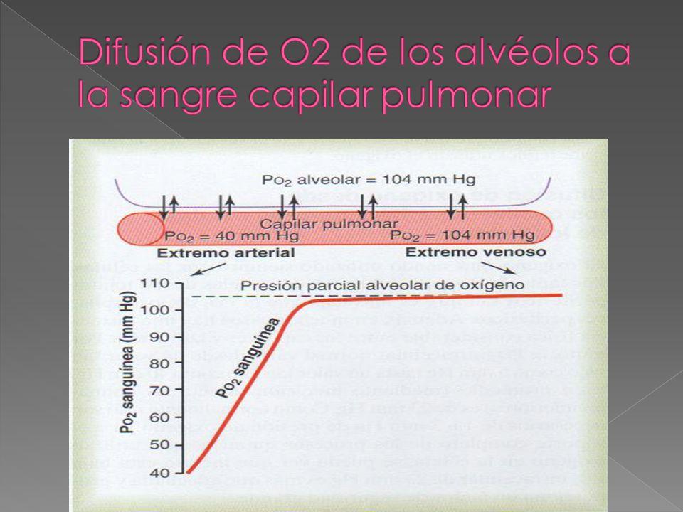 Difusión de O2 de los alvéolos a la sangre capilar pulmonar