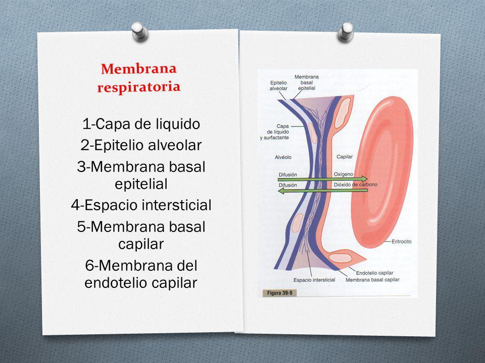Membrana respiratoria