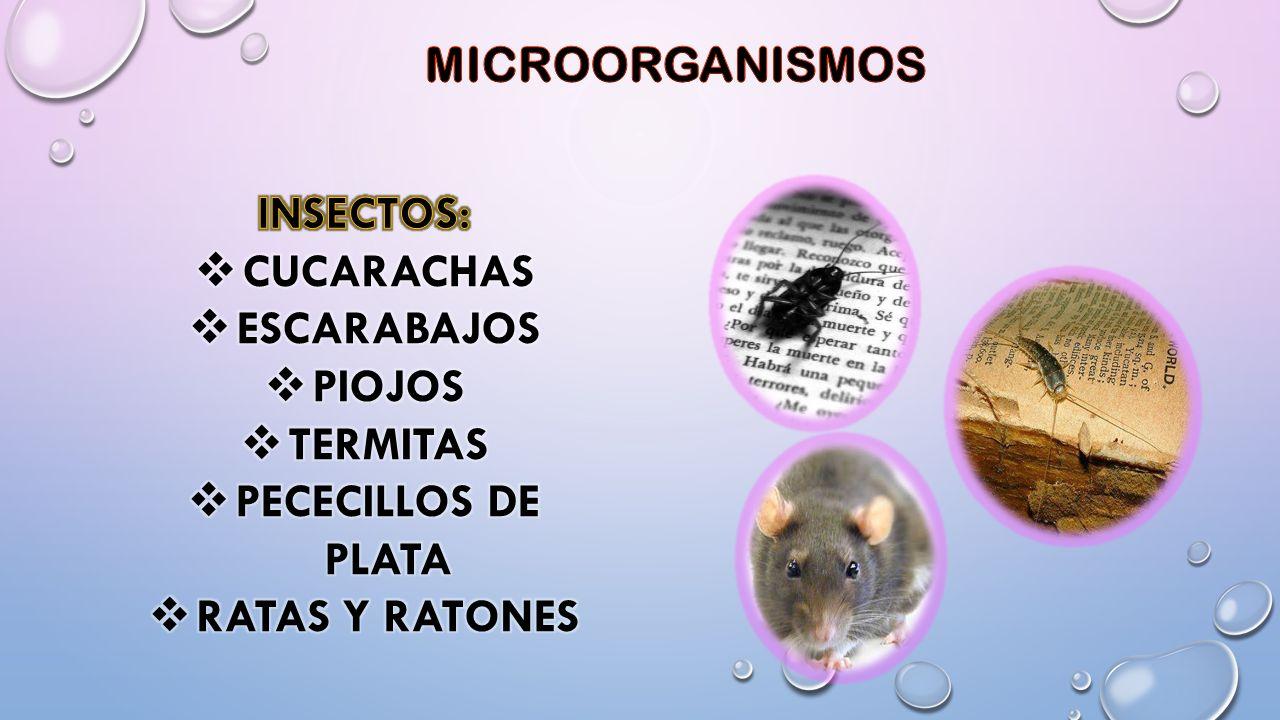 MICROORGANISMOS INSECTOS: CUCARACHAS. ESCARABAJOS.