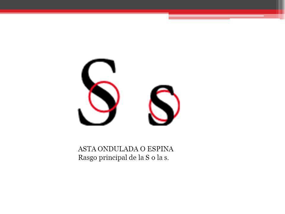 ASTA ONDULADA O ESPINA Rasgo principal de la S o la s.