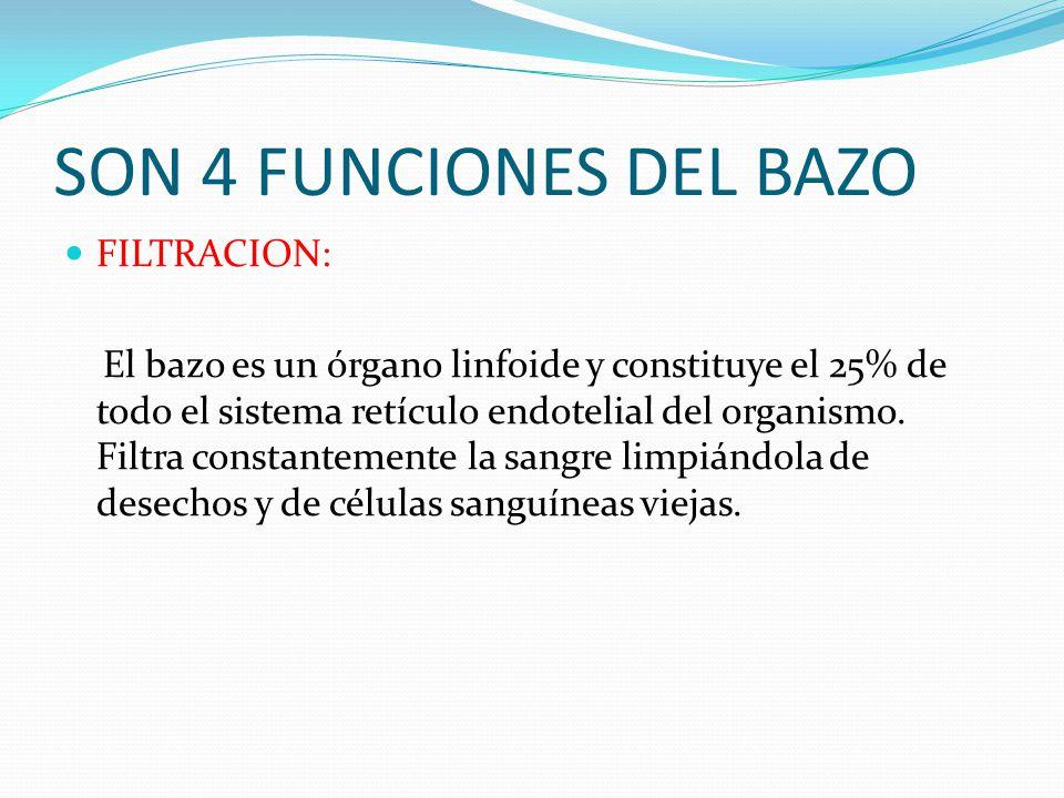 SON 4 FUNCIONES DEL BAZO FILTRACION: