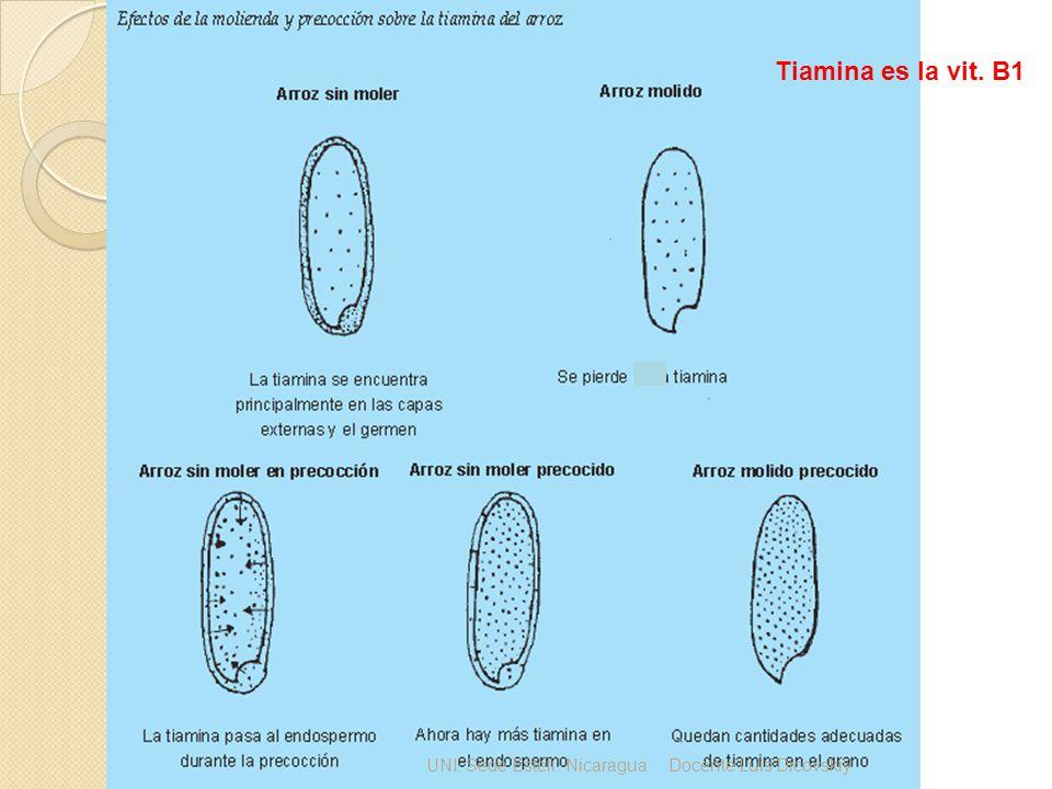Tiamina es la vit. B1 UNI. Sede Estelí. Nicaragua