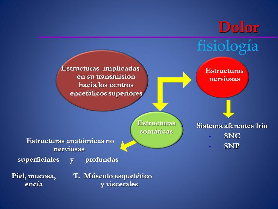 Dolor fisiología Estructuras implicadas en su transmisión hacia los centros encefálicos superiores.