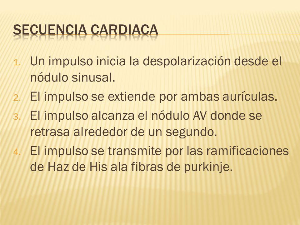 Secuencia cardiaca Un impulso inicia la despolarización desde el nódulo sinusal. El impulso se extiende por ambas aurículas.