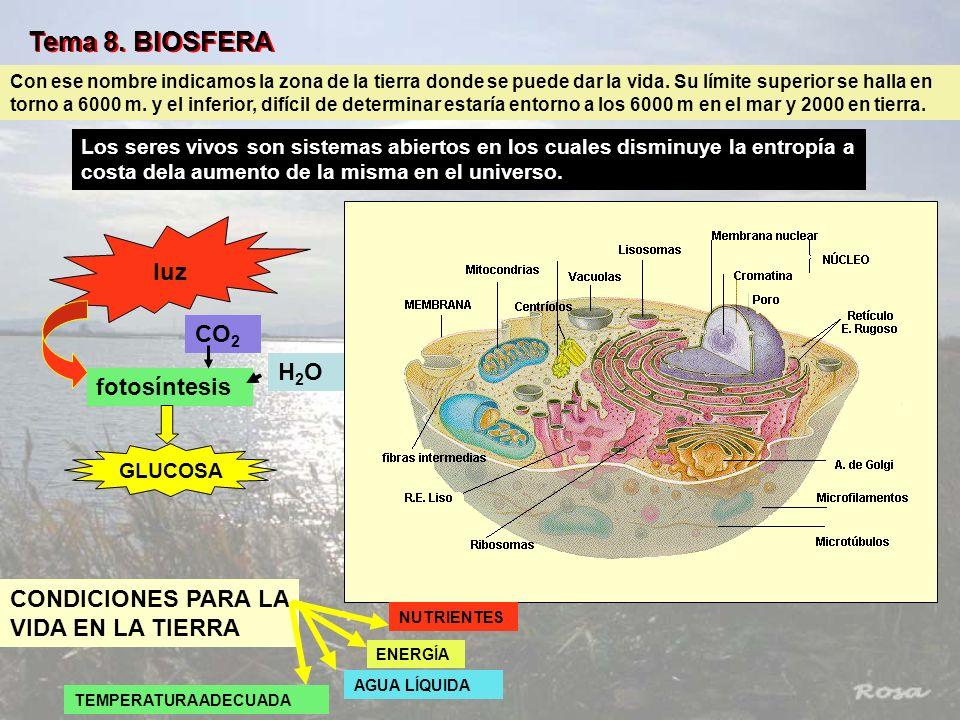 Tema 8. BIOSFERA luz CO2 H2O fotosíntesis