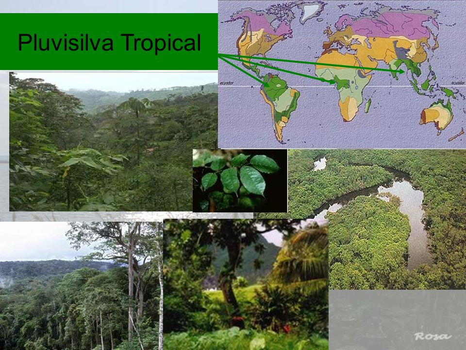 Pluvisilva Tropical