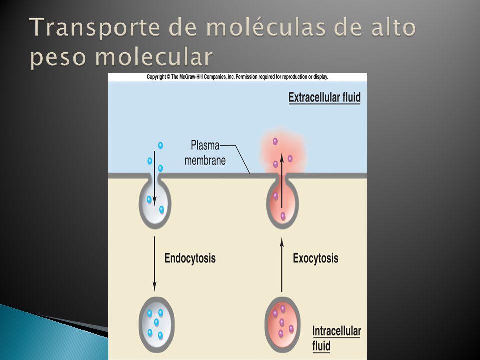 Transporte de moléculas de alto peso molecular