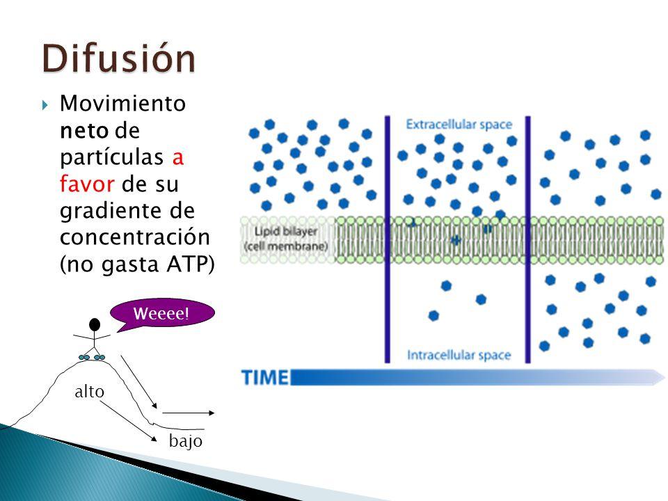 Difusión Movimiento neto de partículas a favor de su gradiente de concentración (no gasta ATP)