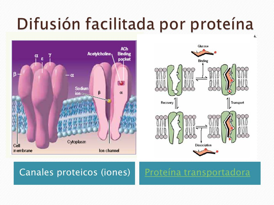 Difusión facilitada por proteína