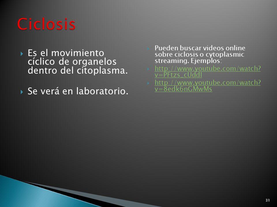 Ciclosis Es el movimiento cíclico de organelos dentro del citoplasma.