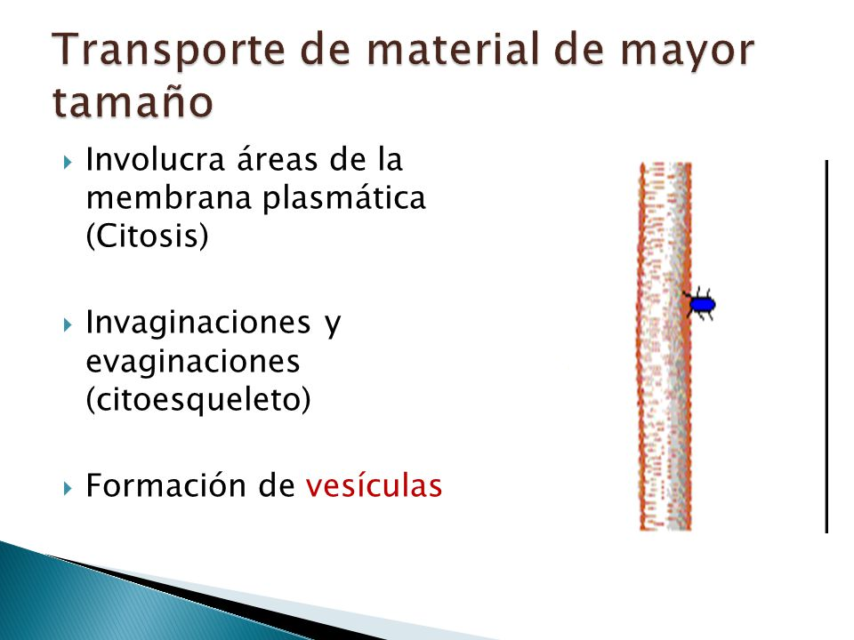 Transporte de material de mayor tamaño