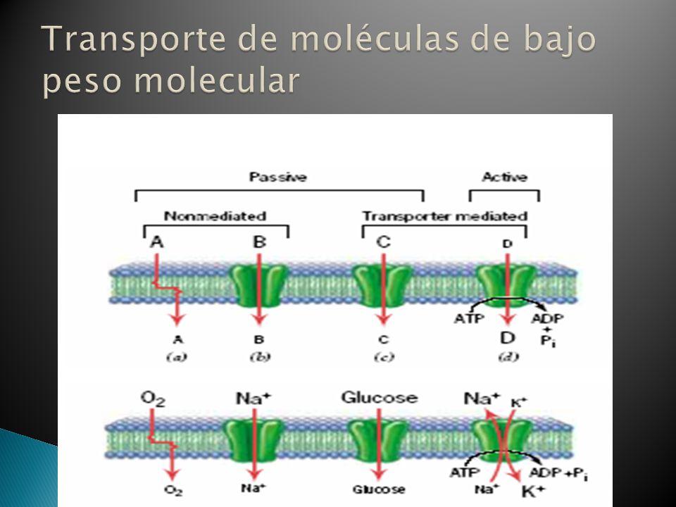 Transporte de moléculas de bajo peso molecular