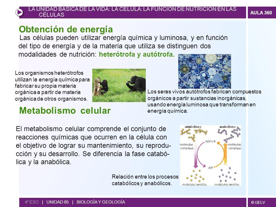 Obtención de energía Metabolismo celular