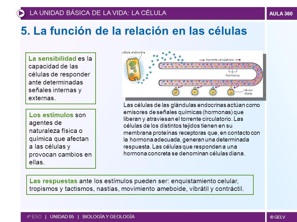 5. La función de la relación en las células