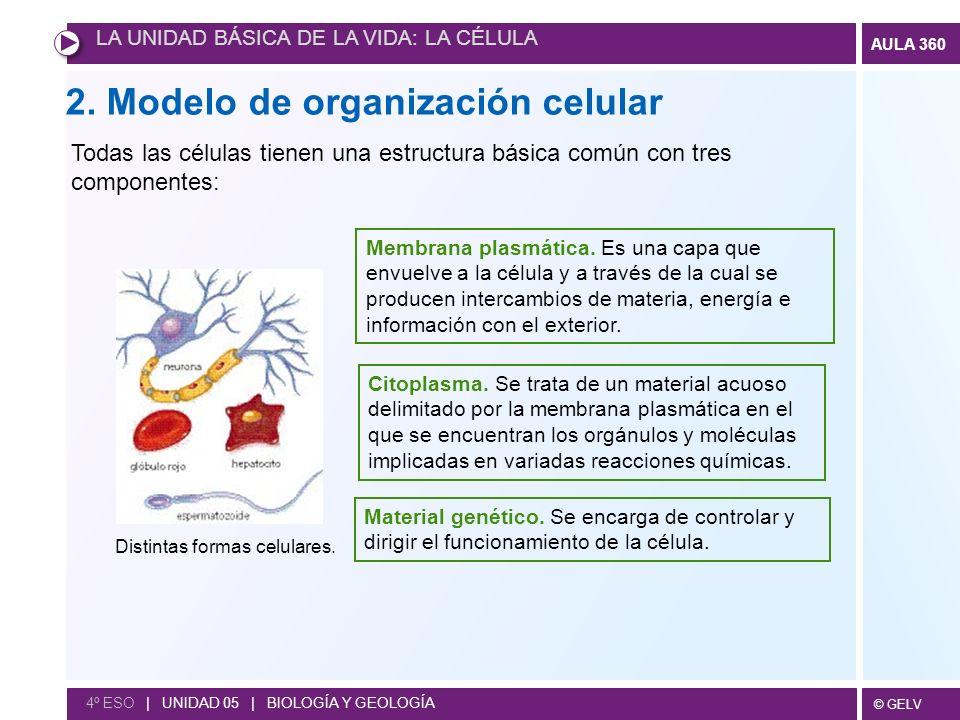 2. Modelo de organización celular