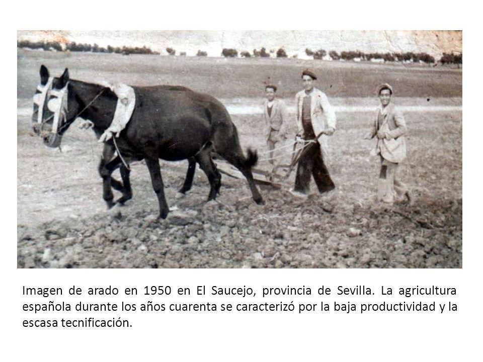 Imagen de arado en 1950 en El Saucejo, provincia de Sevilla