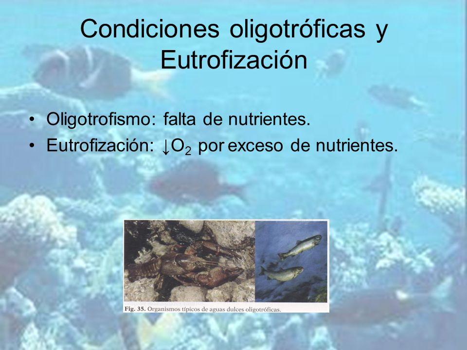 Condiciones oligotróficas y Eutrofización