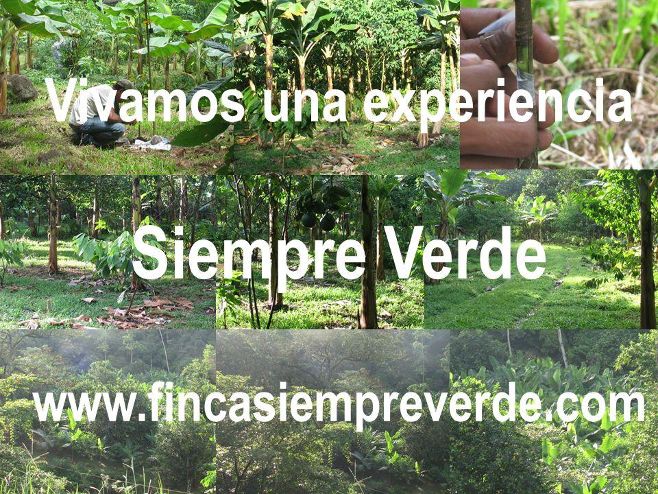 Vivamos una experiencia Siempre Verde www.fincasiempreverde.com