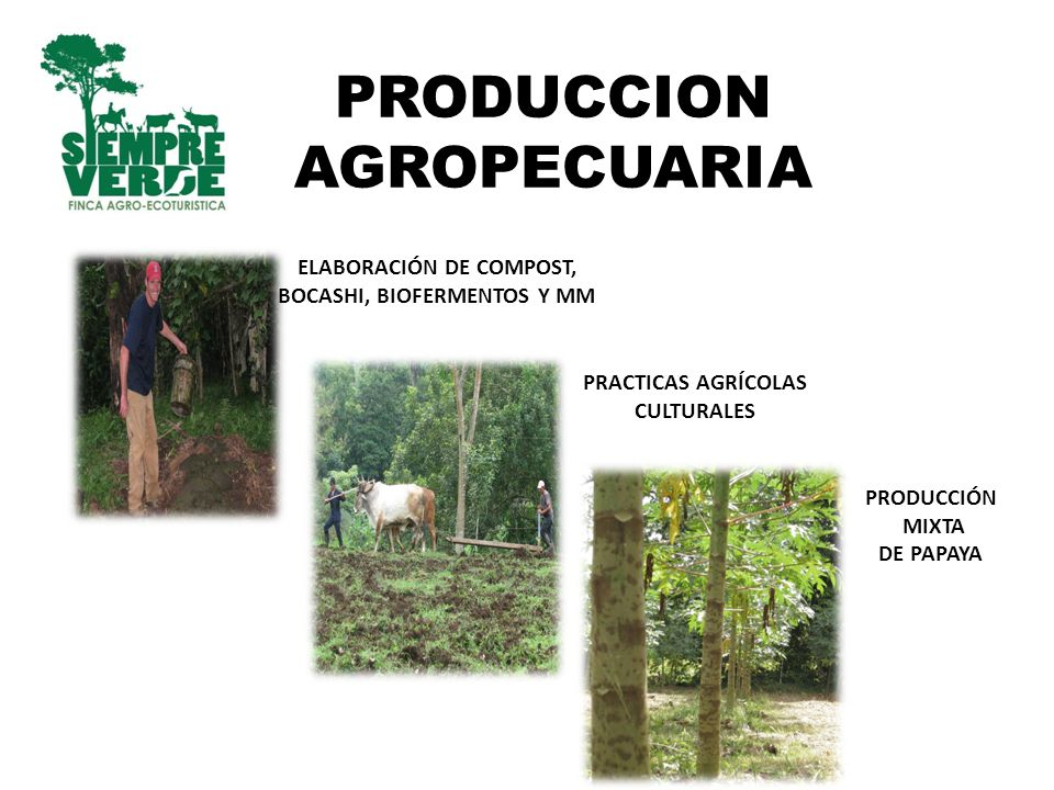 PRODUCCION AGROPECUARIA