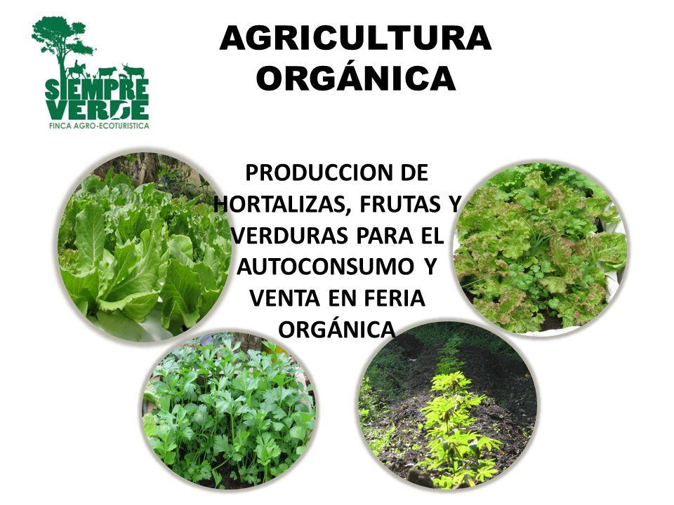 AGRICULTURA ORGÁNICA PRODUCCION DE HORTALIZAS, FRUTAS Y VERDURAS PARA EL AUTOCONSUMO Y VENTA EN FERIA ORGÁNICA.