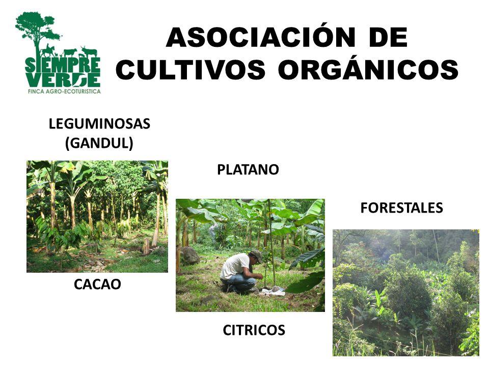 ASOCIACIÓN DE CULTIVOS ORGÁNICOS