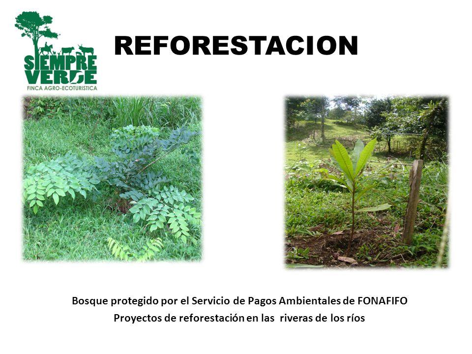 REFORESTACION Bosque protegido por el Servicio de Pagos Ambientales de FONAFIFO.