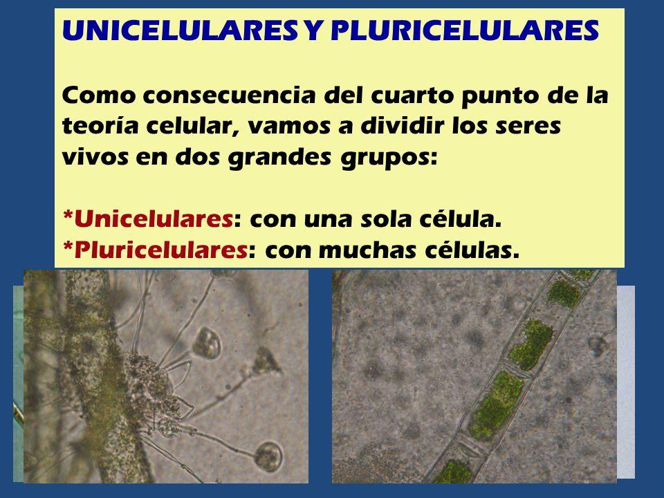 UNICELULARES Y PLURICELULARES