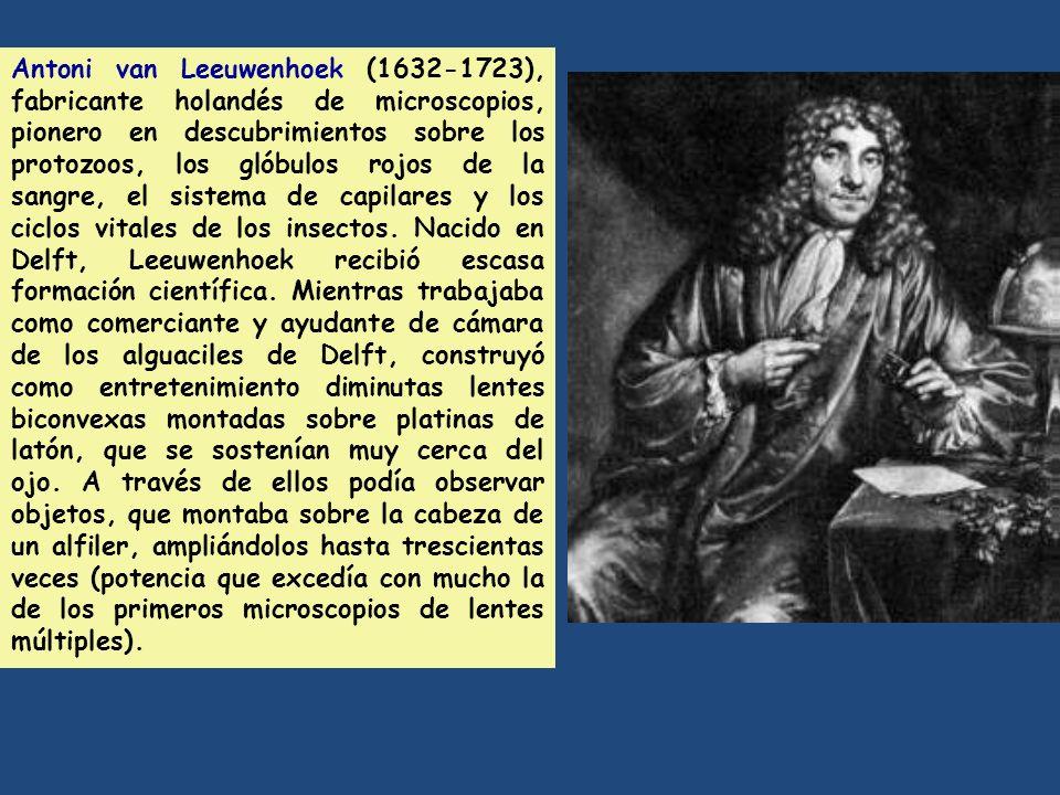 Antoni van Leeuwenhoek (1632-1723), fabricante holandés de microscopios, pionero en descubrimientos sobre los protozoos, los glóbulos rojos de la sangre, el sistema de capilares y los ciclos vitales de los insectos.