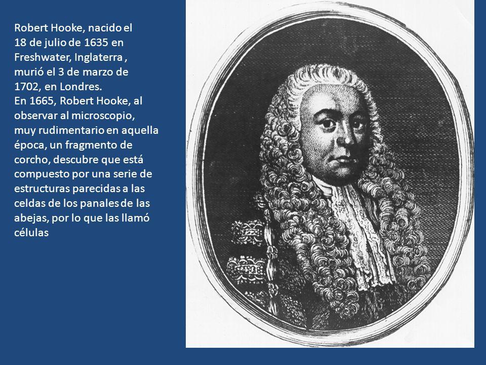 Robert Hooke, nacido el 18 de julio de 1635 en. Freshwater, Inglaterra , murió el 3 de marzo de. 1702, en Londres.