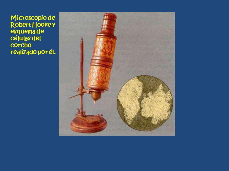 Microscopio de Robert Hooke y esquema de células del corcho realizado por él.