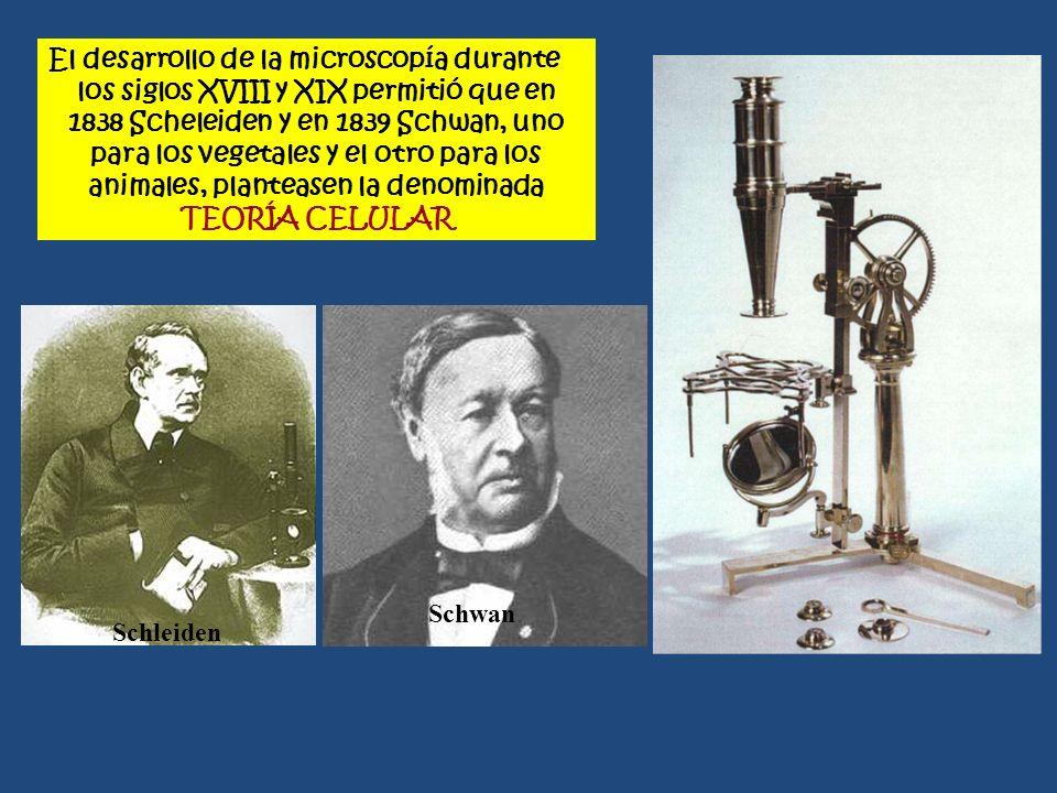 El desarrollo de la microscopía durante