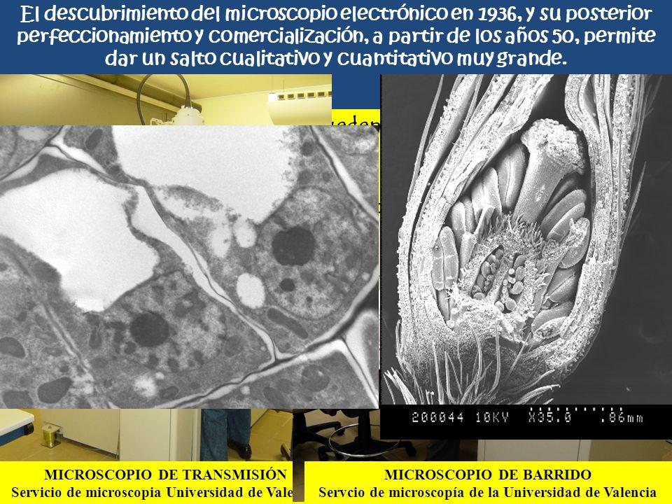Los microscopios electrónicos pueden ser de dos tipos:
