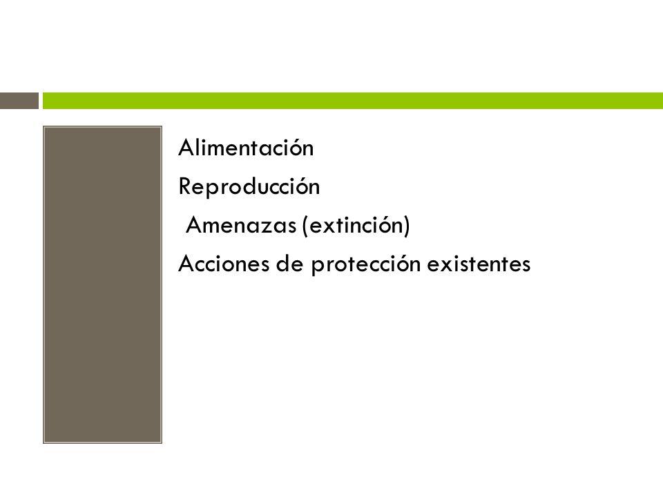 Alimentación Reproducción Amenazas (extinción) Acciones de protección existentes