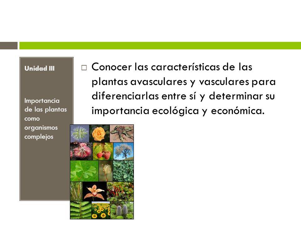 Unidad III Importancia de las plantas como organismos complejos.