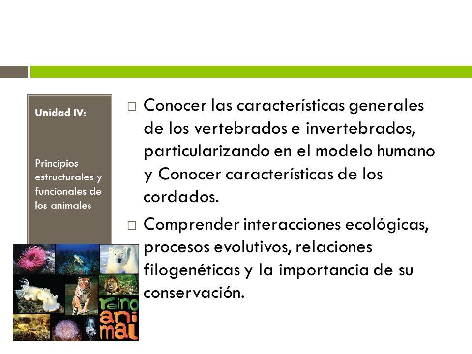 Conocer las características generales de los vertebrados e invertebrados, particularizando en el modelo humano y Conocer características de los cordados.