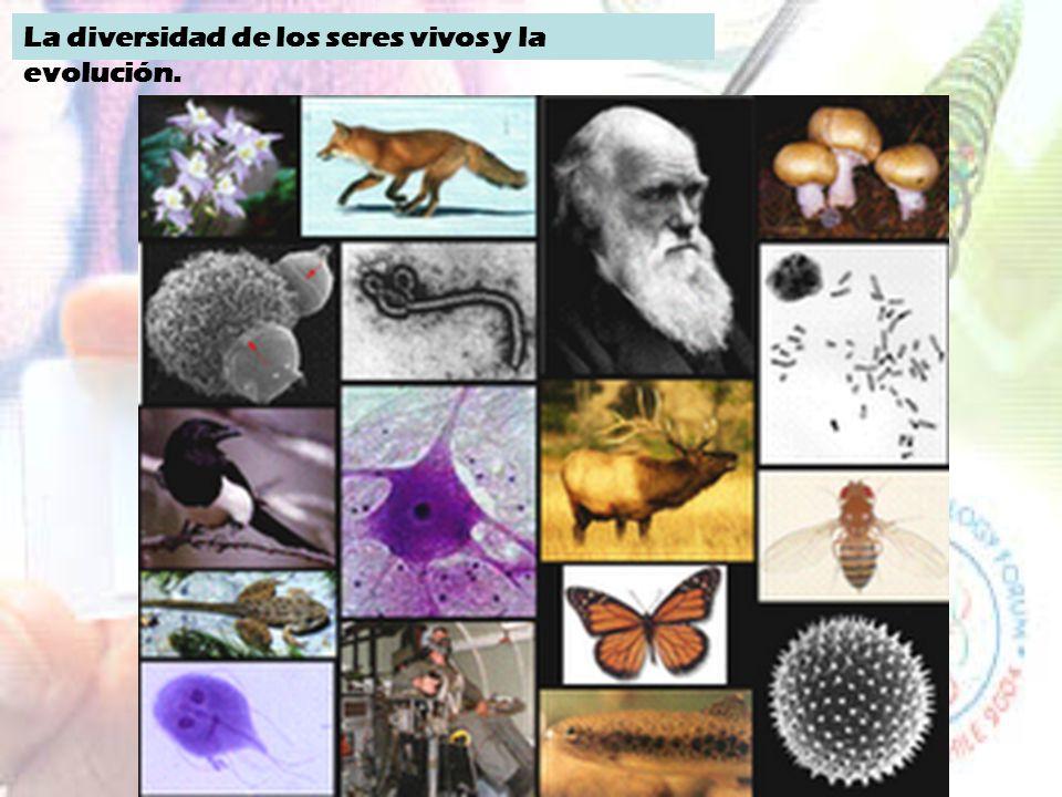 La diversidad de los seres vivos y la evolución.