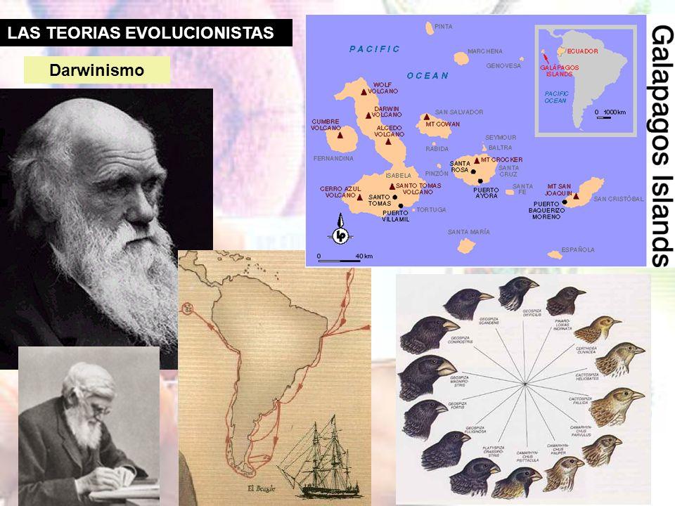 LAS TEORIAS EVOLUCIONISTAS