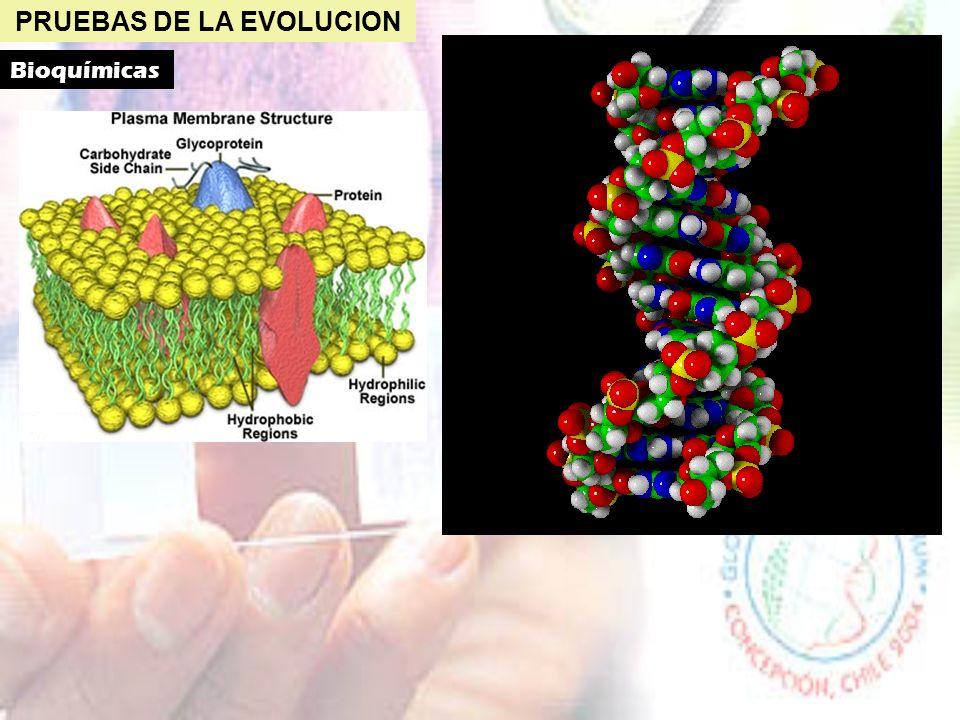 PRUEBAS DE LA EVOLUCION