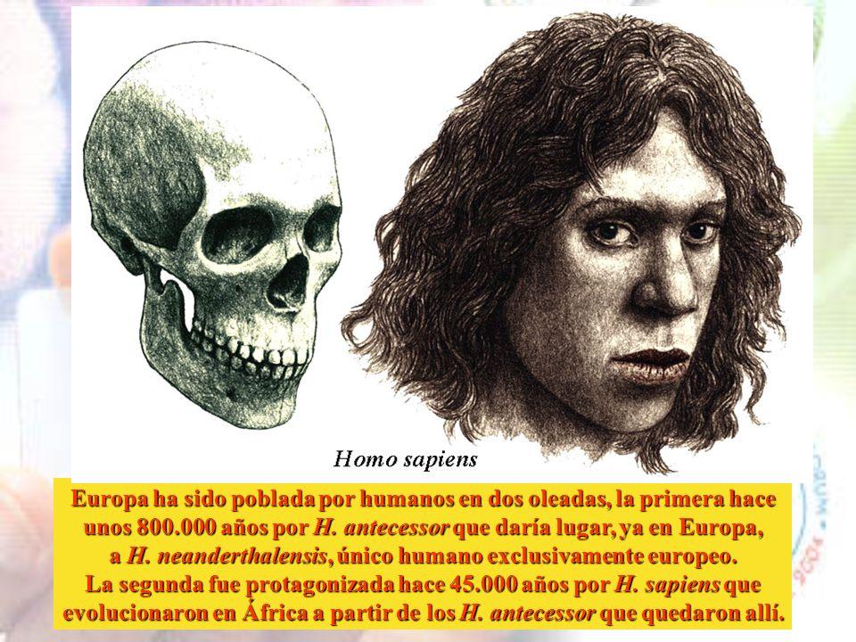 Europa ha sido poblada por humanos en dos oleadas, la primera hace