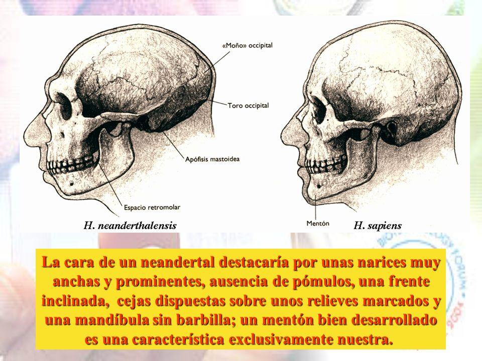 La cara de un neandertal destacaría por unas narices muy